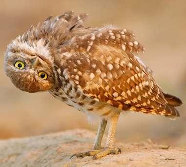 upside-sown-owl_1913739i